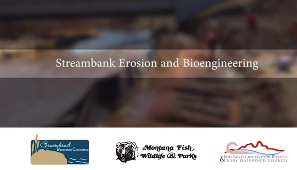 Bioengineering blog post