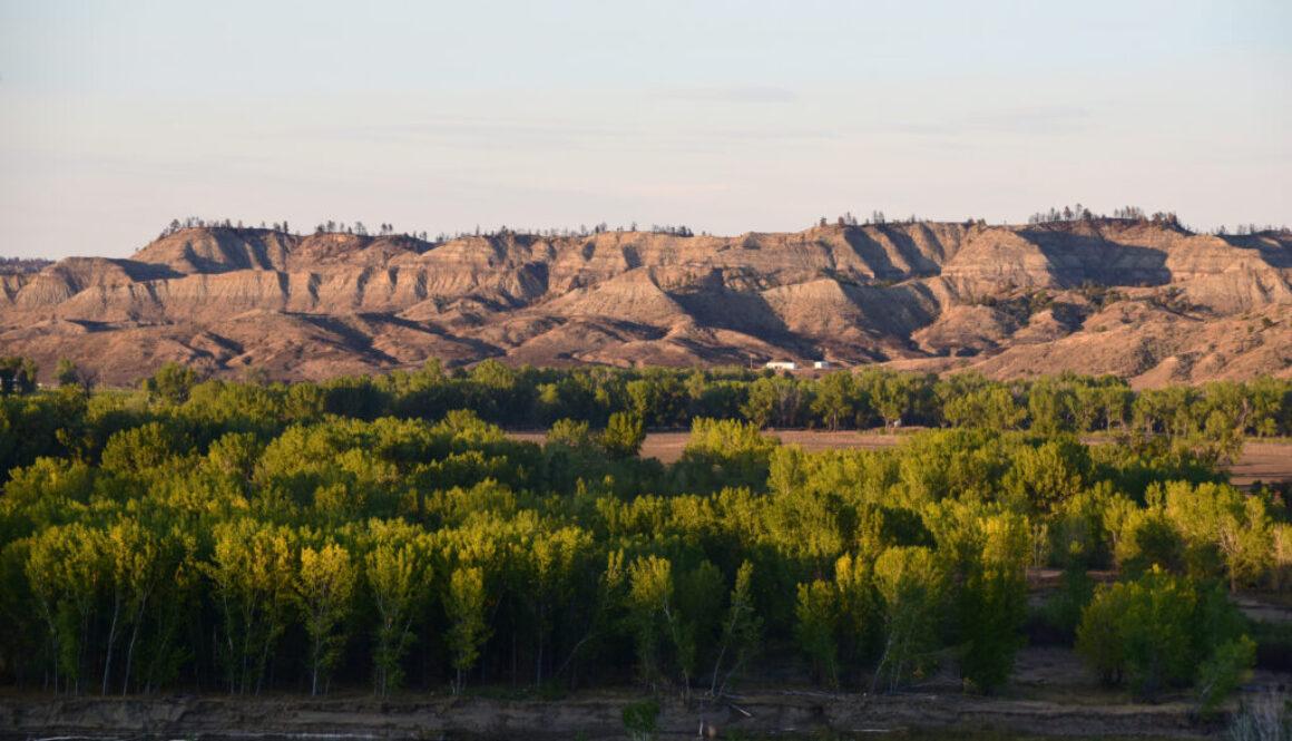 Mussellshell-landscapes
